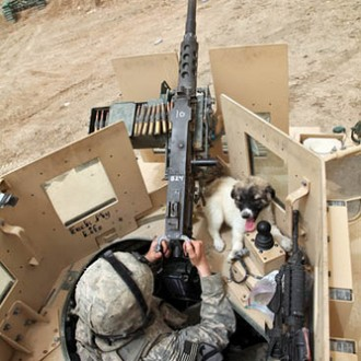 us army with lap dog